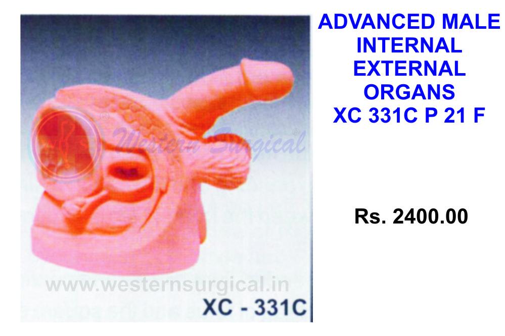 Advanced Male Internal & External Organs