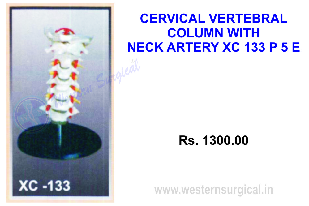 Cervical vertebral column with neck artery, occipital, herniated disc and nerves.