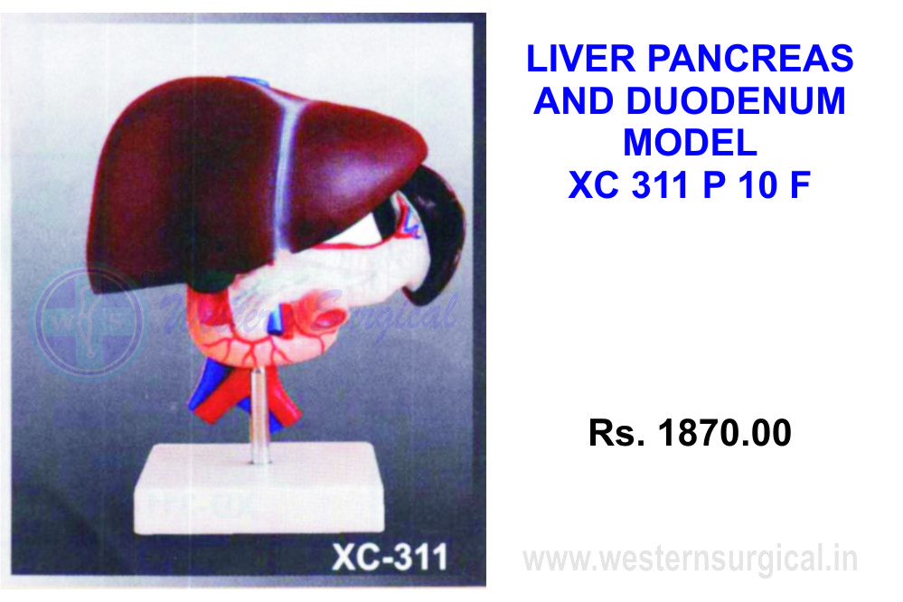 Liver, Pancreas and Duodenum model